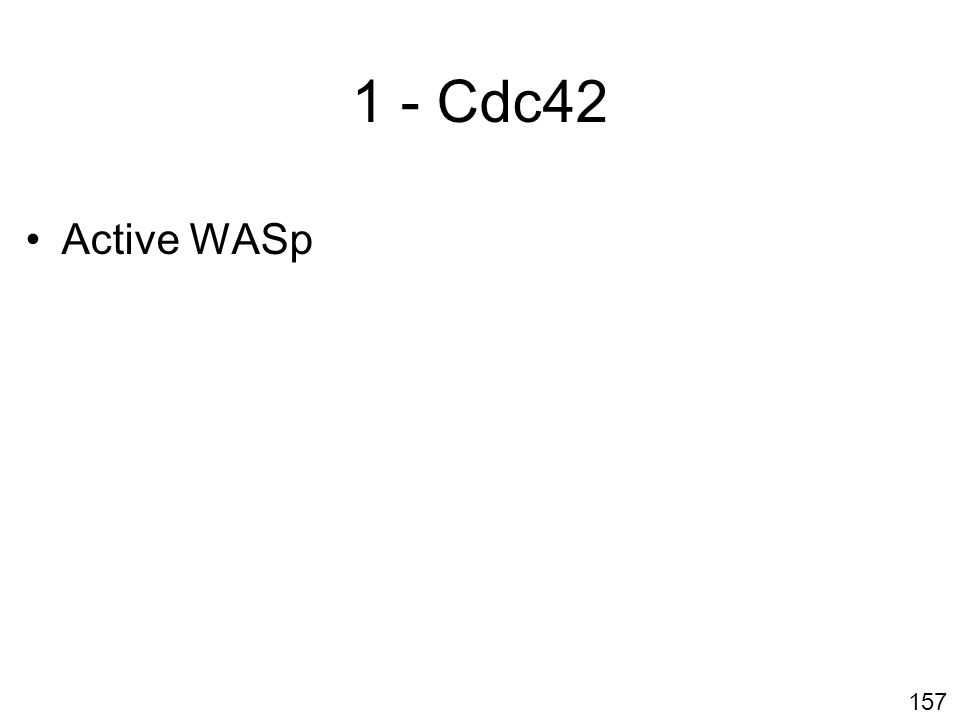 157 1 - Cdc42 Active WASp