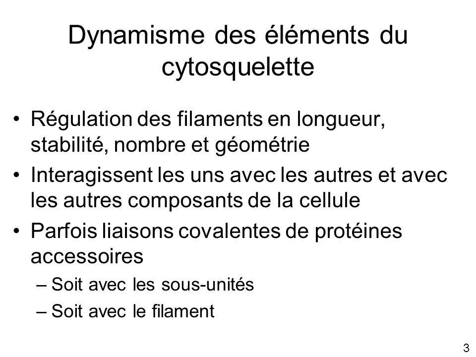 4 Plan A.Nucléation B. Protéines de liaison dynamisme du cytosquelette C.