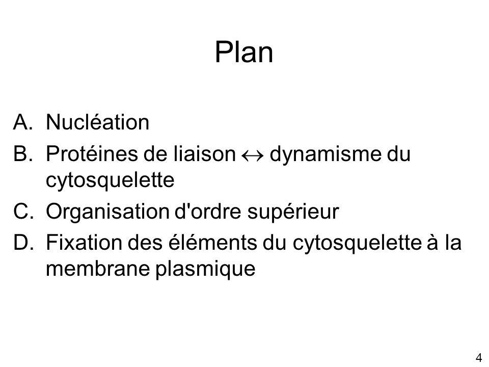 45 Sites de régulation de la profiline Membrane plasmique Se lie aux phospholipides de la membrane plasmique En relation étroite avec lextérieur pour faire croître lamellipodes ou filopodes