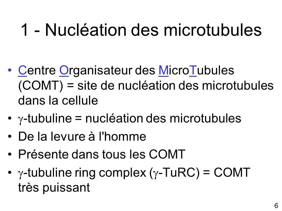 7 a) - Nucléation des microtubules par la -tubuline Nucléation à lextrémité moins Allongement par lextrémité plus Intervention de deux protéines qui se fixent directement à la -tubuline