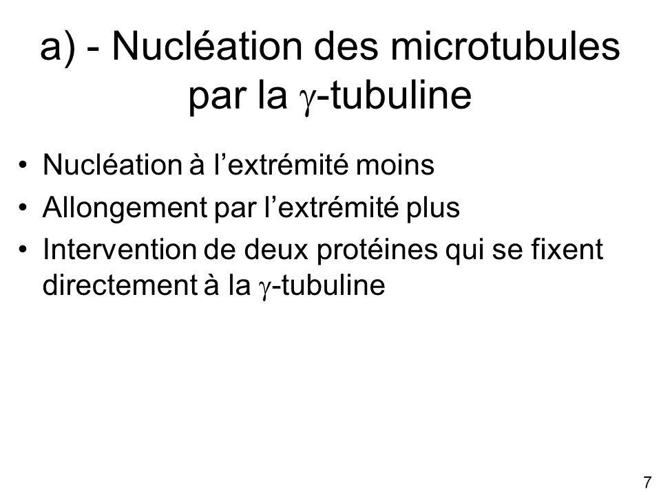18 Orientation des microtubules Configuration en étoile des microtubules Extrémité plus tournée vers lextérieur de la cellule Extrémité moins tournée vers le noyau Dispositif de surveillance – de la périphérie de lintérieur de la cellule – et de la position centrale du centrosome conservé même in vitro…