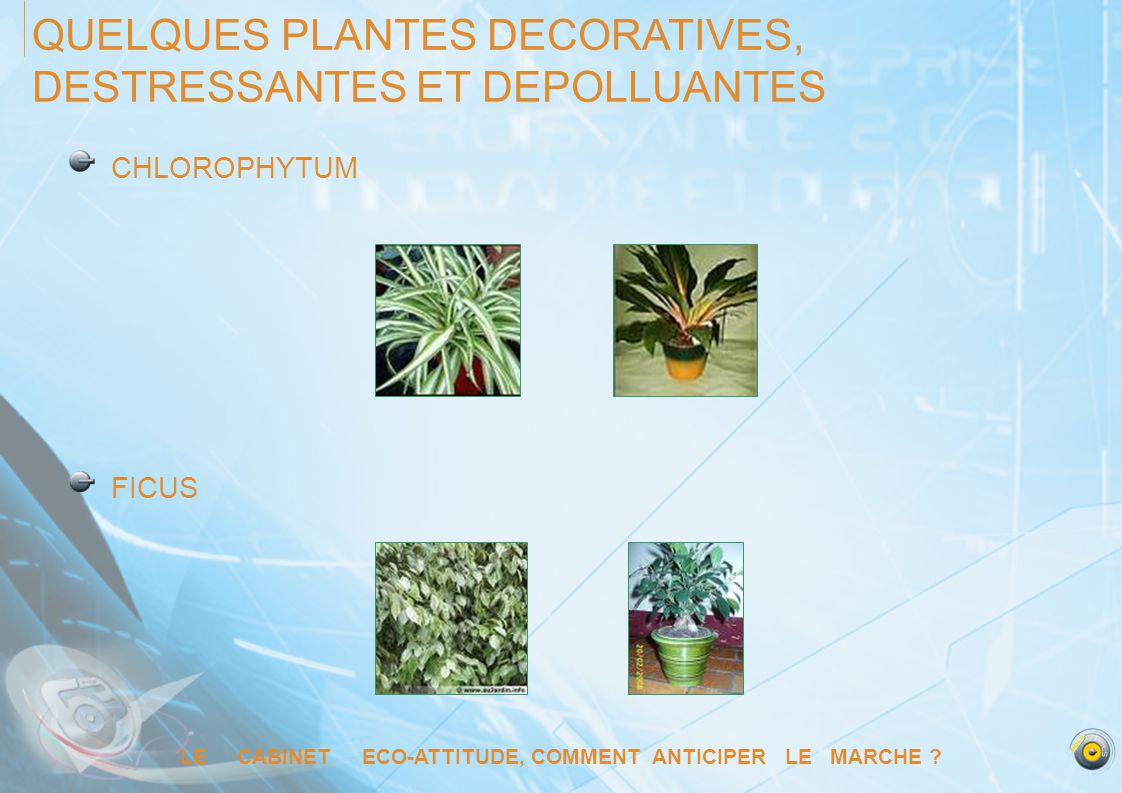 LE CABINET ECO-ATTITUDE, COMMENT ANTICIPER LE MARCHE ? QUELQUES PLANTES DECORATIVES, DESTRESSANTES ET DEPOLLUANTES CHLOROPHYTUM FICUS