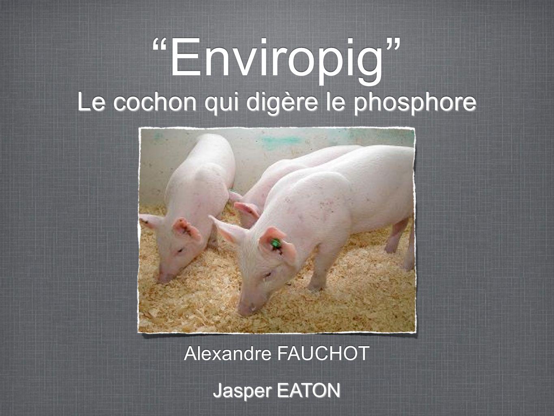 Enviropig Le cochon qui digère le phosphore Alexandre FAUCHOT Jasper EATON