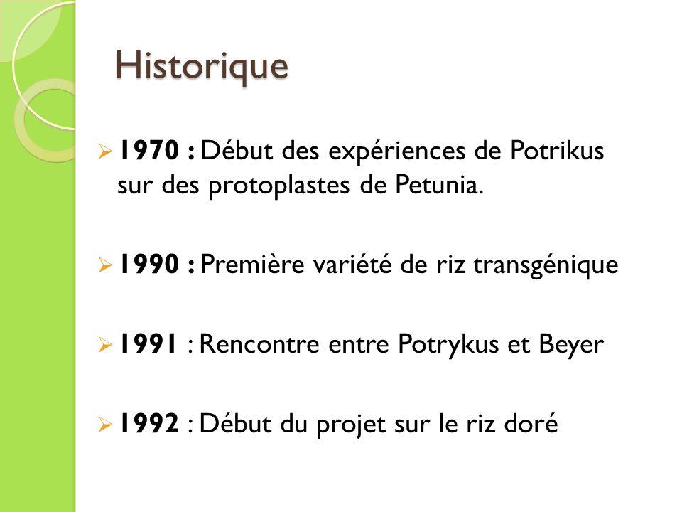 Historique 1970 : Début des expériences de Potrikus sur des protoplastes de Petunia.