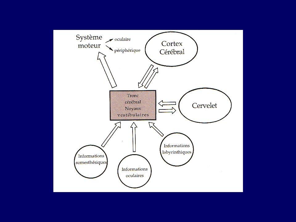 -tension artérielle : hyper- ou hypotension.