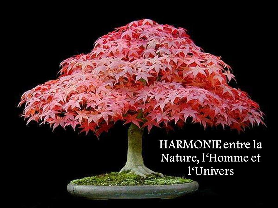 HARMONIE entre la Nature, lHomme et lUnivers