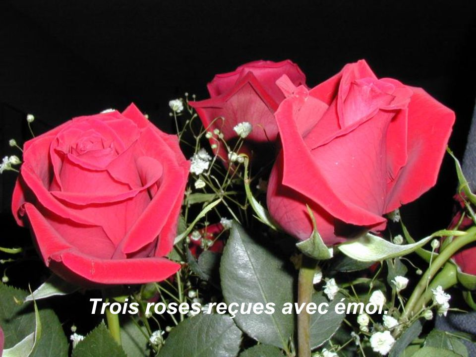 Trois roses offertes avec joie.
