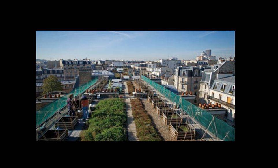 Des potagers fleurissent sur les toits de Paris Et si les légumes des citadins poussaient sur le toit de leurs immeubles.
