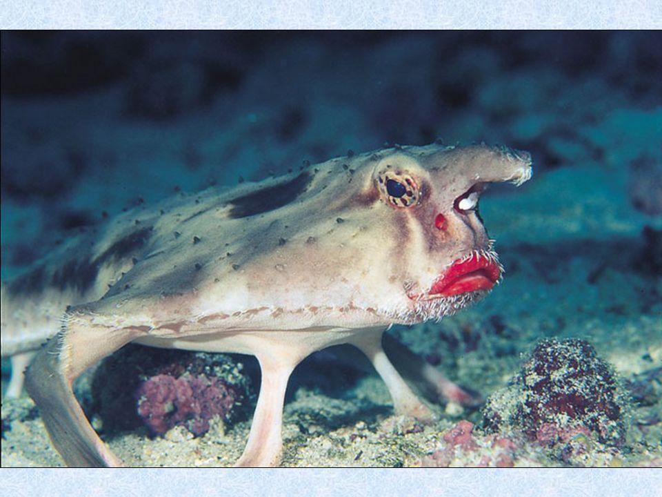 9. The Mantis Schrimp (La crevette mante-religieuse)