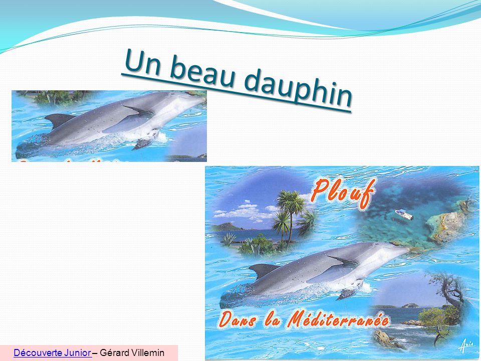 Un beau dauphin 6 Découverte Junior Découverte Junior – Gérard Villemin