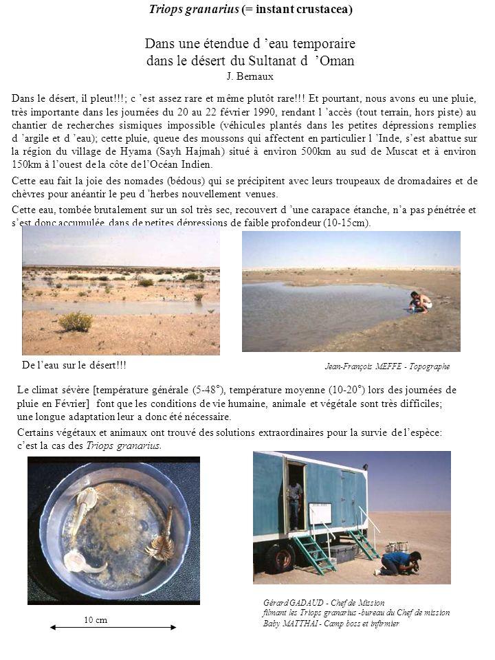 Triops granarius (= instant crustacea) Dans une étendue d eau temporaire dans le désert du Sultanat d Oman J. Bernaux Dans le désert, il pleut!!!; c e