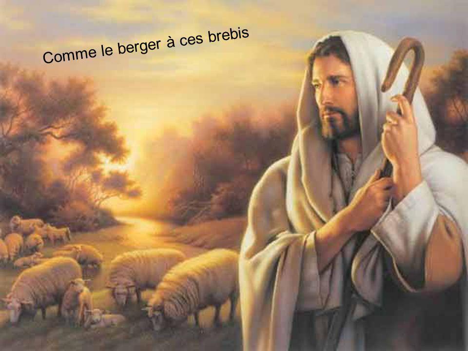 Comme le berger à ces brebis Seigneur toi seul mon grand ami
