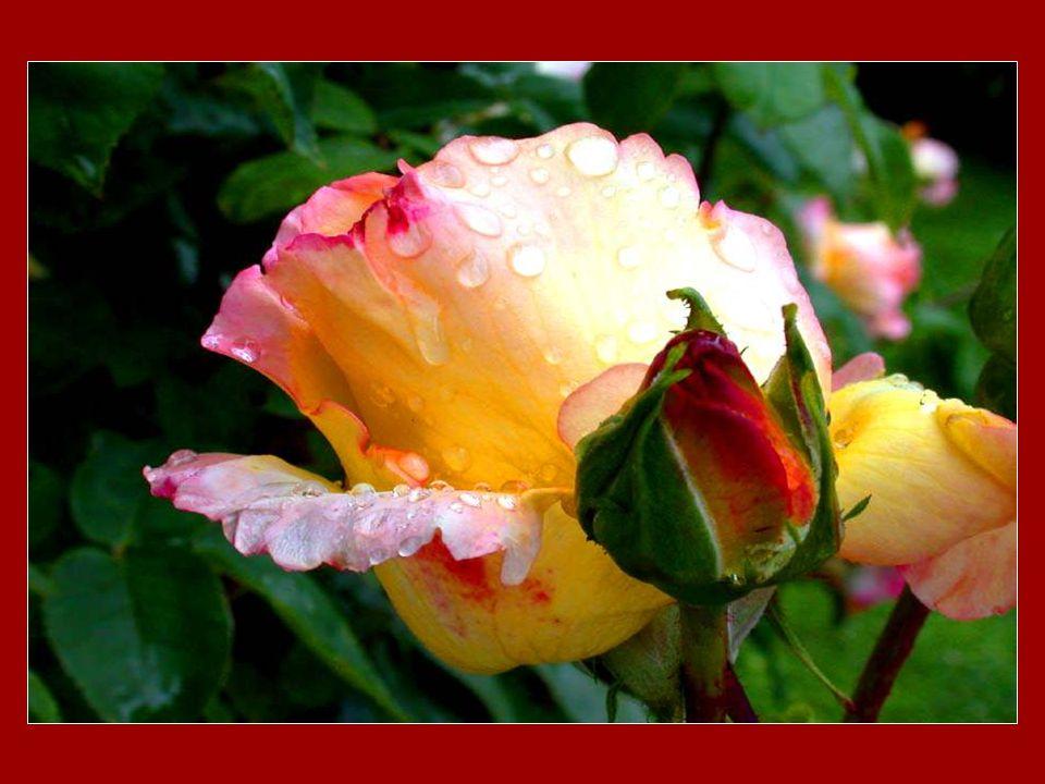Si Dieu est… harmonie, la plus belle prière cest de chanter.