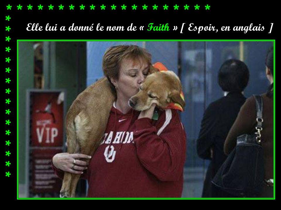 * * * * * * * * * * * * * * * * * * Le premier propriétaire de ce chien ne croyait pas qu'il allait survivre et voulait le faire euthanasier. Mais Jud