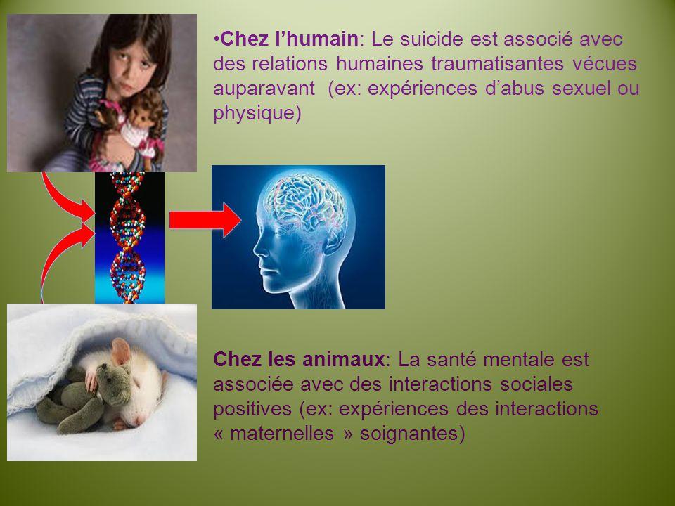 Chez lhumain: Le suicide est associé avec des relations humaines traumatisantes vécues auparavant (ex: expériences dabus sexuel ou physique) Chez les