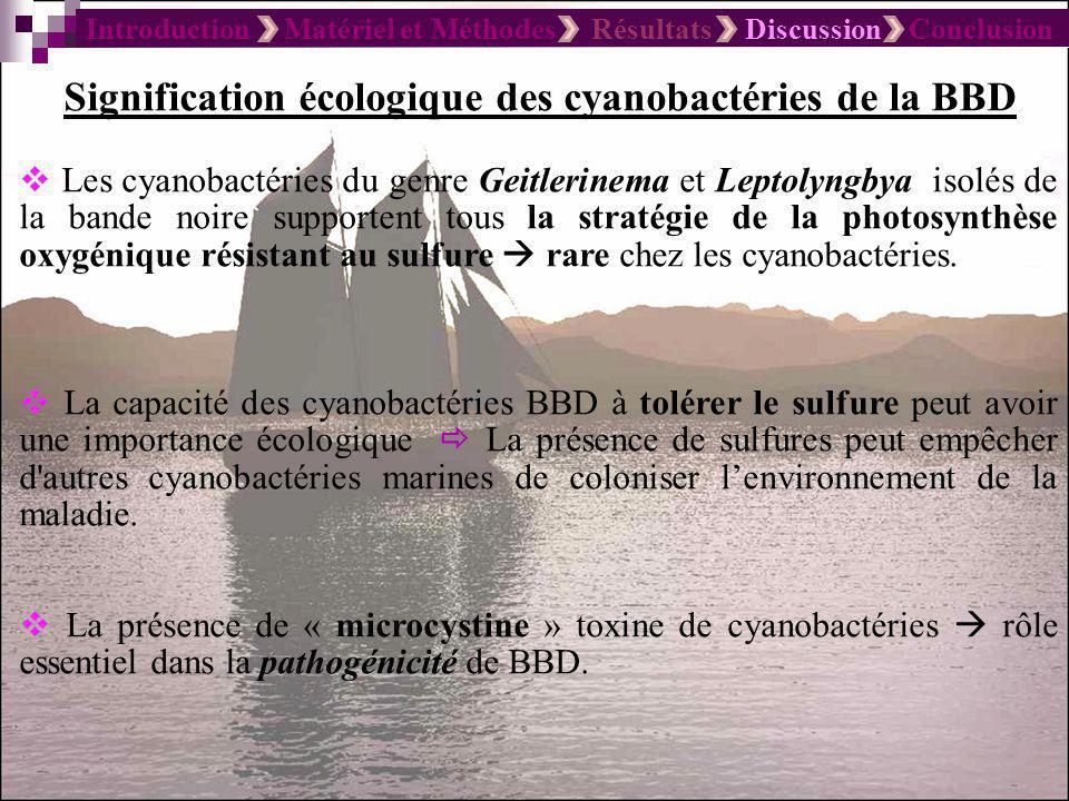 Introduction Matériel et Méthodes Résultats Discussion Conclusion Signification écologique des cyanobactéries de la BBD Les cyanobactéries du genre Ge