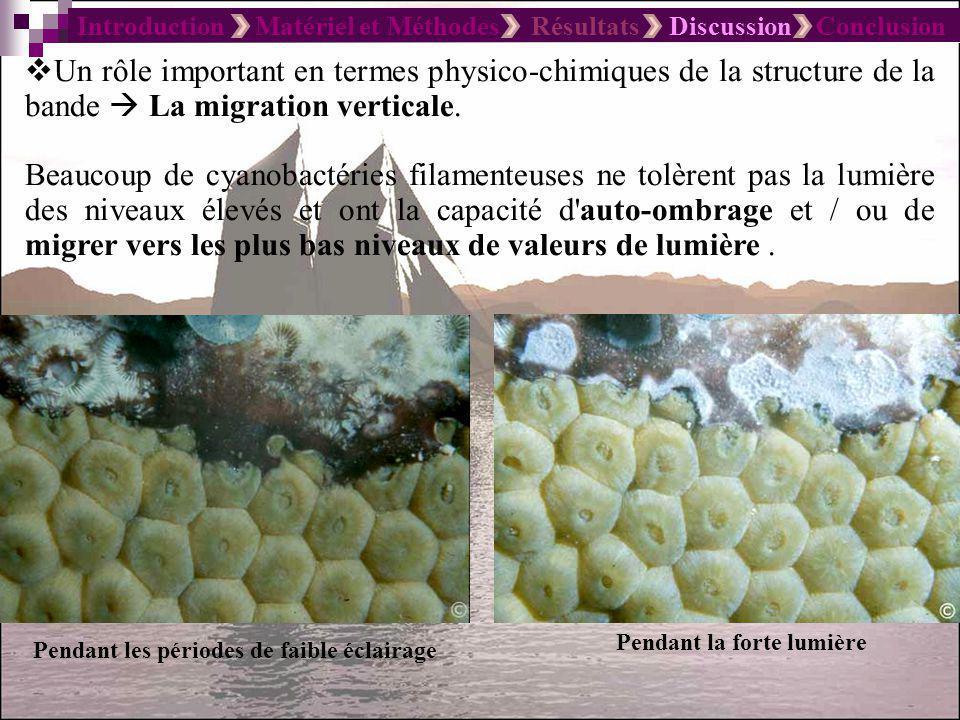 Introduction Matériel et Méthodes Résultats Discussion Conclusion Un rôle important en termes physico-chimiques de la structure de la bande La migrati