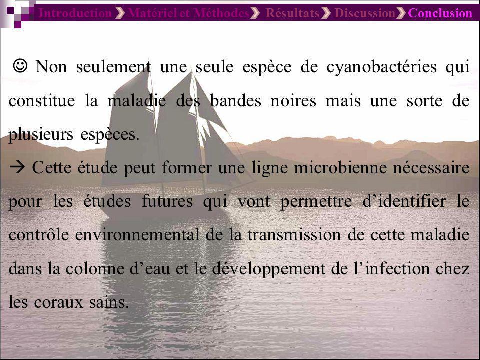 Introduction Matériel et Méthodes Résultats Discussion Conclusion Non seulement une seule espèce de cyanobactéries qui constitue la maladie des bandes