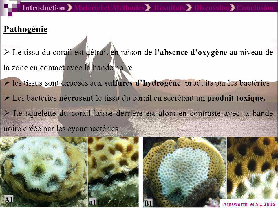 Introduction Matériel et Méthodes Résultats Discussion Conclusion Ainsworth et al., 2006 Pathogénie Le tissu du corail est détruit en raison de labsen