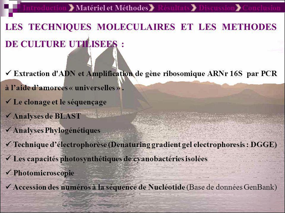 Introduction Matériel et Méthodes Résultats Discussion Conclusion LES TECHNIQUES MOLECULAIRES ET LES METHODES DE CULTURE UTILISEES : Extraction d'ADN