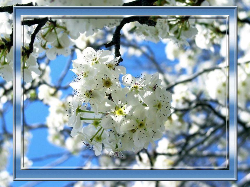 Terre et soleil mariant leur puissance Projettent la sève, et telle une explosion S ouvrent les fleurs, bourgeonnent les branches : Feux d artifices, magnifique saison.