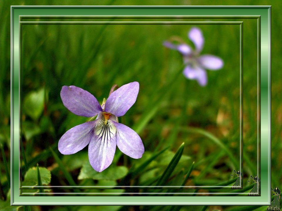 Riches parfums se mêlant à la brise Dispersez vos effluves doux ou exaltants; De pluie nourricière le sol s enivre La nature étrenne son habit verdoyant.