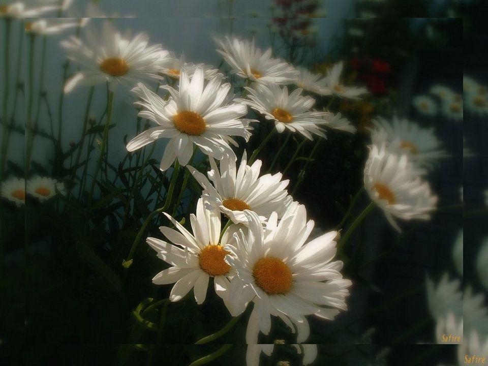 Ode au printemps