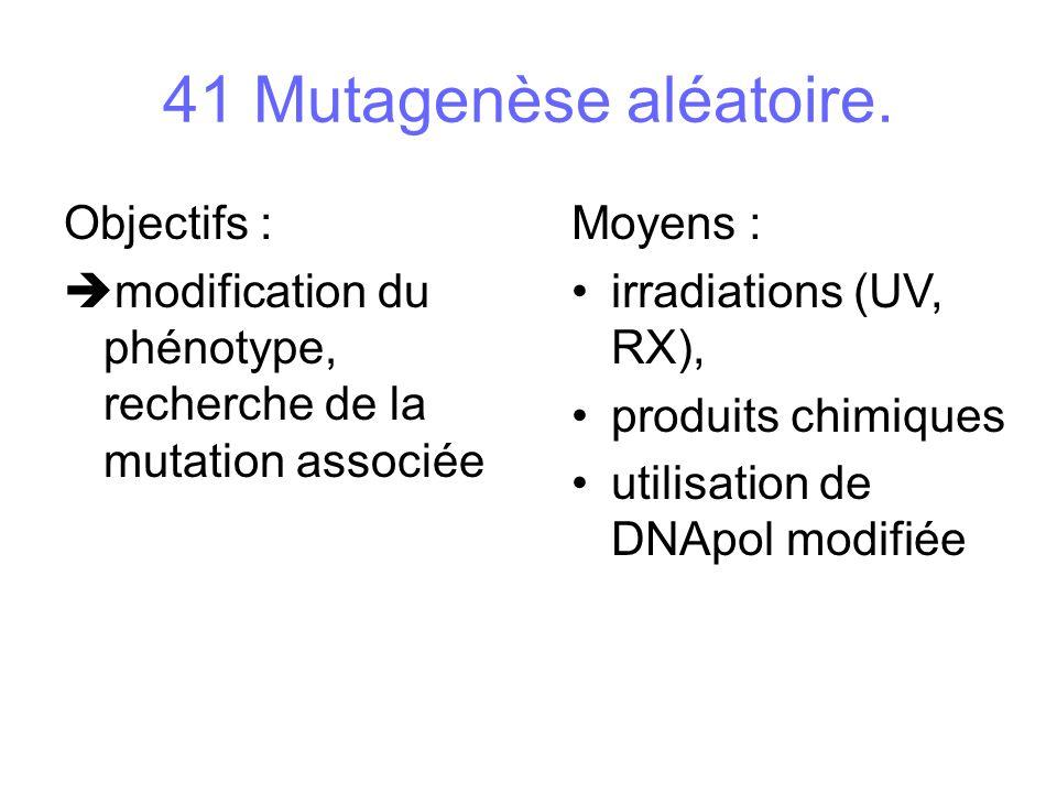 41 Mutagenèse aléatoire. Objectifs : modification du phénotype, recherche de la mutation associée Moyens : irradiations (UV, RX), produits chimiques u