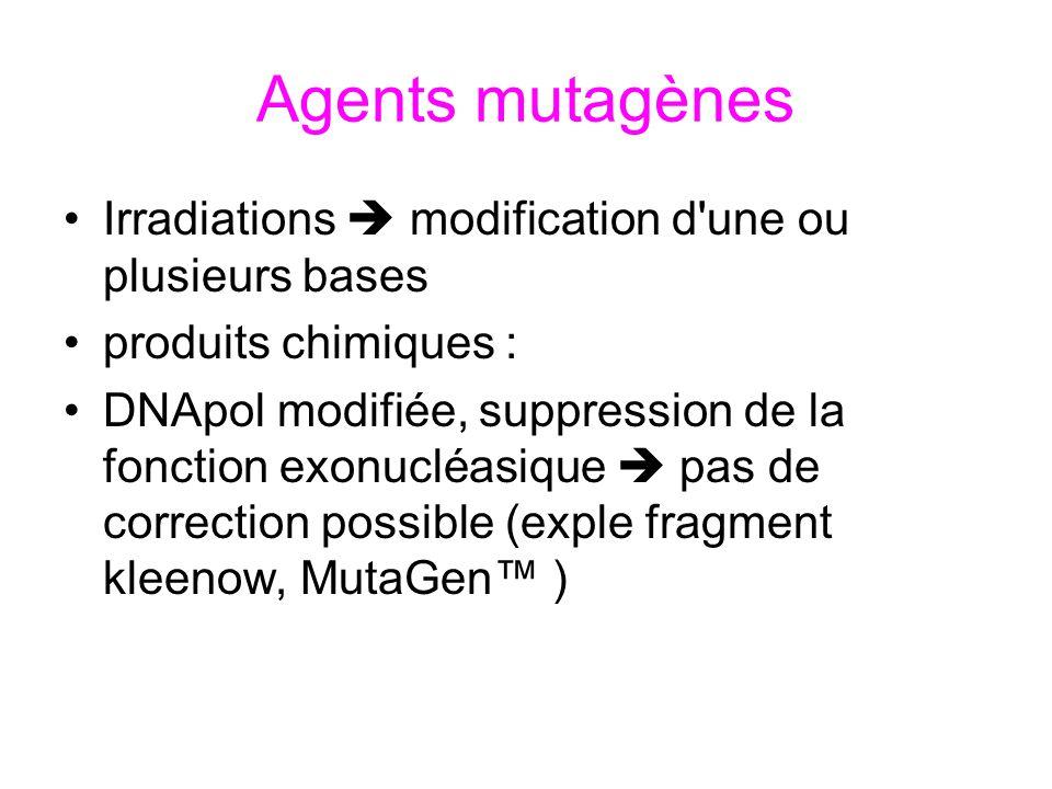 Agents mutagènes Irradiations modification d'une ou plusieurs bases produits chimiques : DNApol modifiée, suppression de la fonction exonucléasique pa