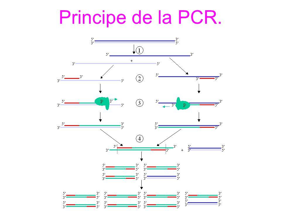Principe de la PCR.