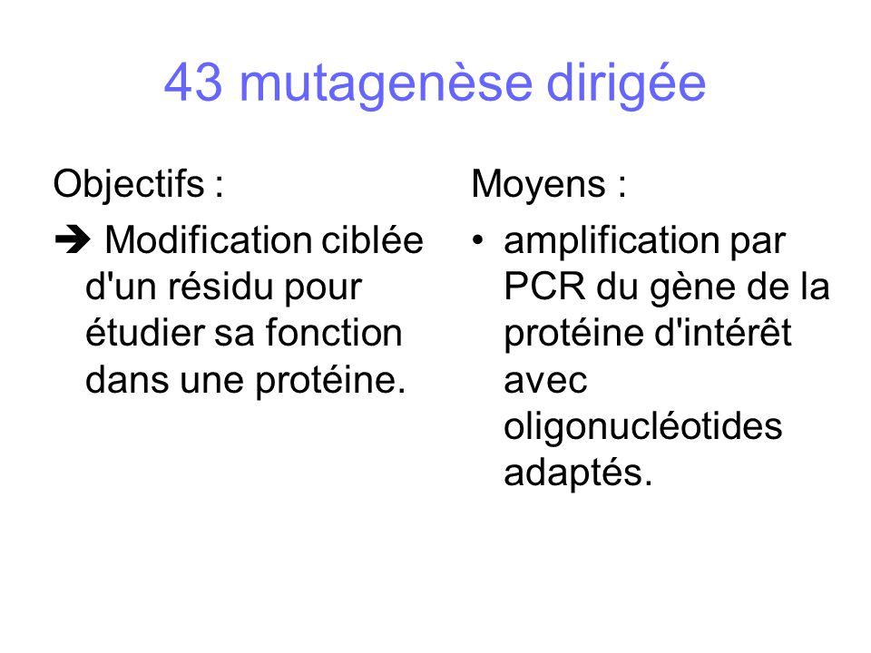 Objectifs : Modification ciblée d'un résidu pour étudier sa fonction dans une protéine. Moyens : amplification par PCR du gène de la protéine d'intérê