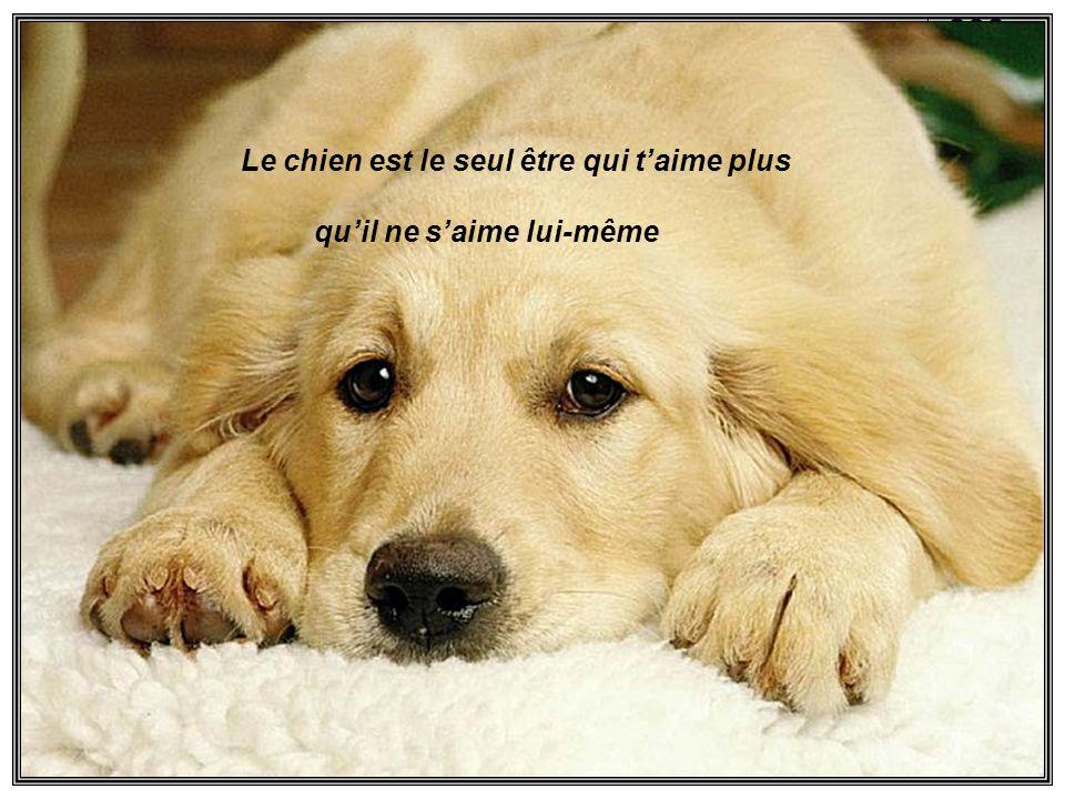Le chien na quun but dans sa vie cest doffrir son coeur