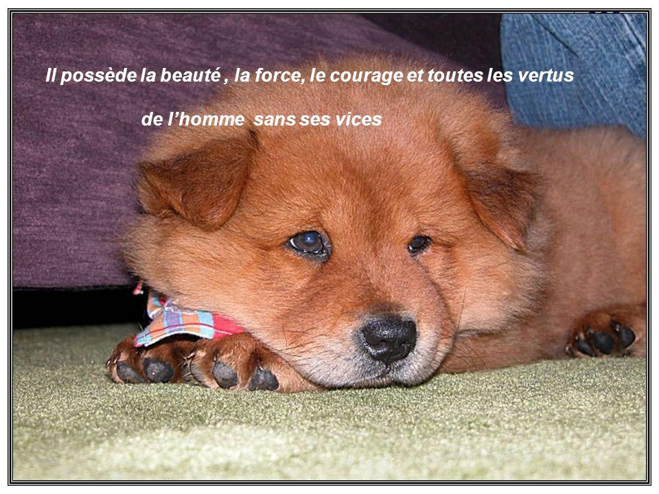 Lamitié du chien est sans conteste plus vive et plus constante que celle de lhomme