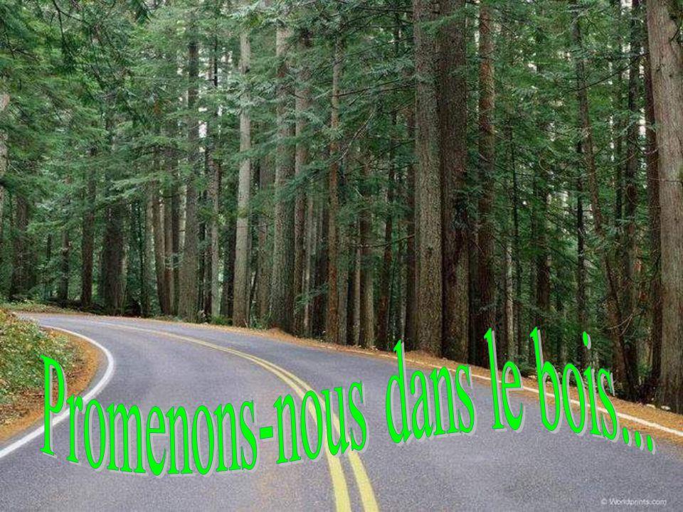 Laisse se dérouler les diapositives… Jouis de cette promenade dans le bois.