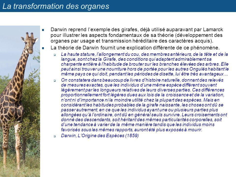 La transformation des organes Darwin reprend lexemple des girafes, déjà utilisé auparavant par Lamarck pour illustrer les aspects fondamentaux de sa t