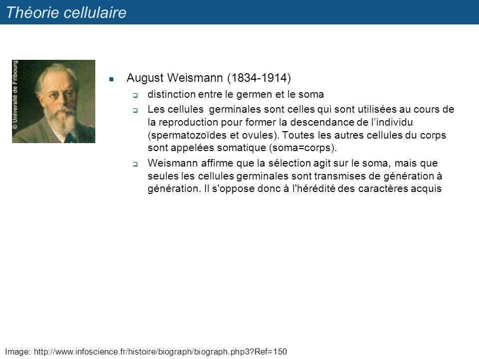 Image: http://www.infoscience.fr/histoire/biograph/biograph.php3?Ref=150 Théorie cellulaire August Weismann (1834-1914) distinction entre le germen et