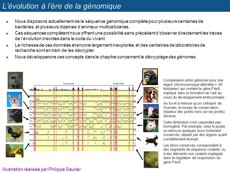 Lévolution à lère de la génomique Nous disposons actuellement de la séquence génomique complète pour plusieurs centaines de bactéries, et plusieurs di