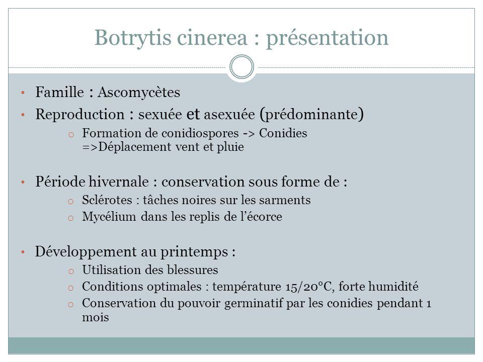 Botrytis cinerea : présentation Famille : Ascomycètes Reproduction : sexuée et asexuée ( prédominante ) o Formation de conidiospores -> Conidies =>Dép