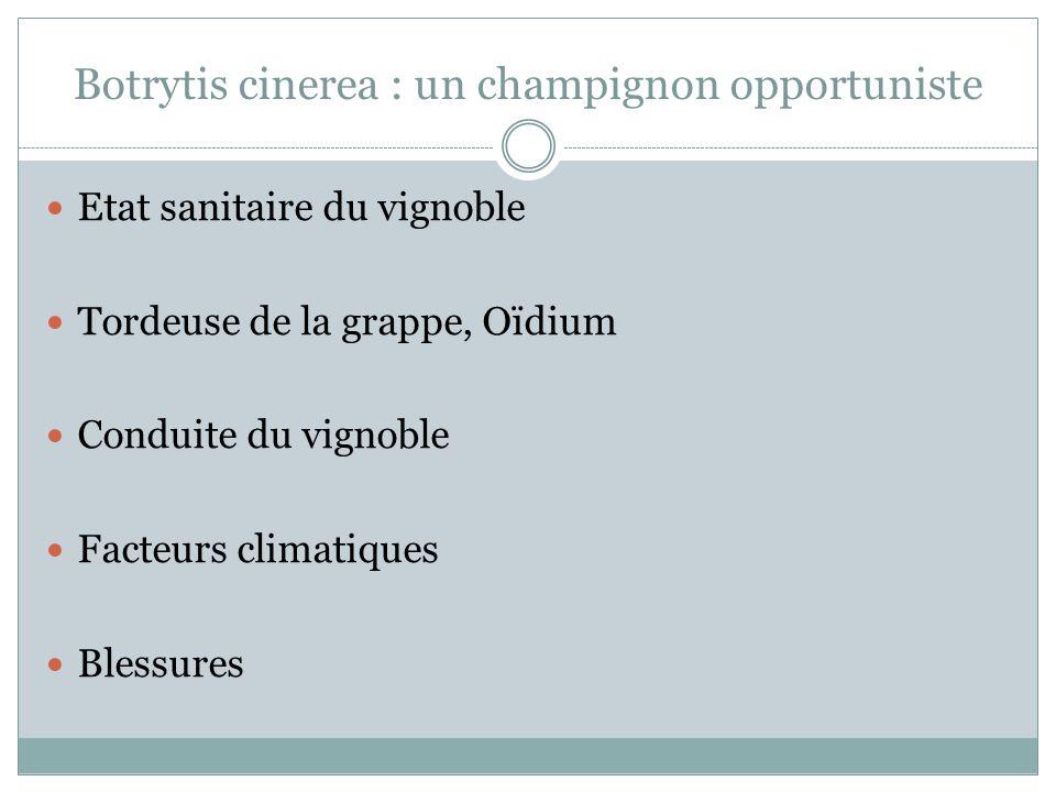 Botrytis cinerea : un champignon opportuniste Etat sanitaire du vignoble Tordeuse de la grappe, Oïdium Conduite du vignoble Facteurs climatiques Bless