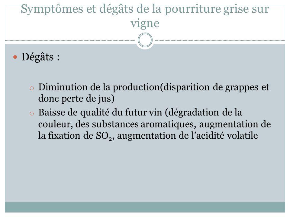 Symptômes et dégâts de la pourriture grise sur vigne Dégâts : o Diminution de la production(disparition de grappes et donc perte de jus) o Baisse de q