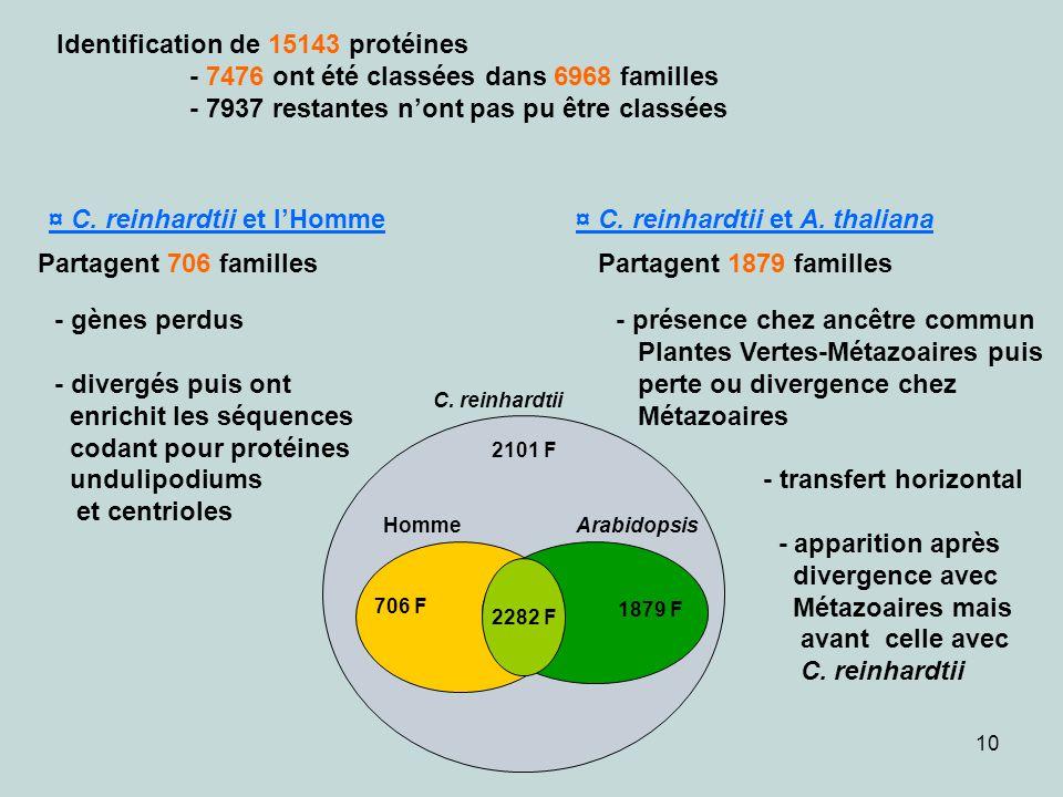 10 Identification de 15143 protéines - 7476 ont été classées dans 6968 familles - 7937 restantes nont pas pu être classées ¤ C. reinhardtii et lHomme
