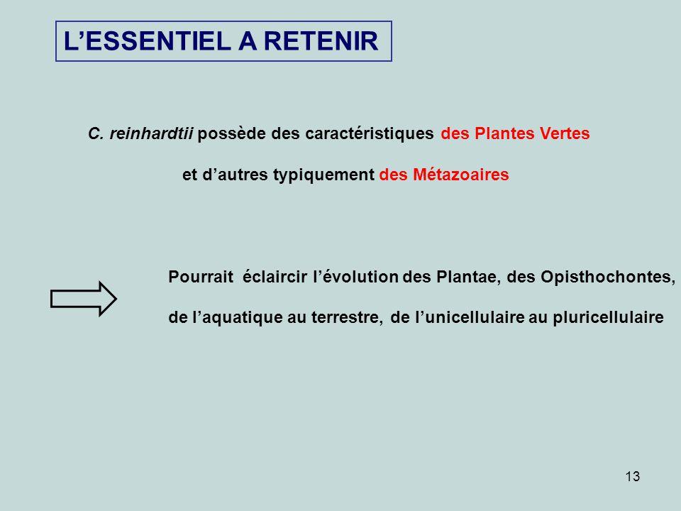 13 LESSENTIEL A RETENIR C. reinhardtii possède des caractéristiques des Plantes Vertes et dautres typiquement des Métazoaires Pourrait éclaircir lévol