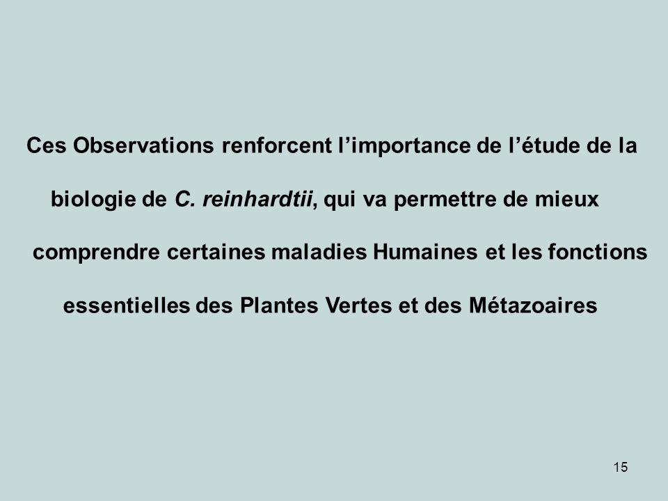 15 Ces Observations renforcent limportance de létude de la biologie de C. reinhardtii, qui va permettre de mieux comprendre certaines maladies Humaine