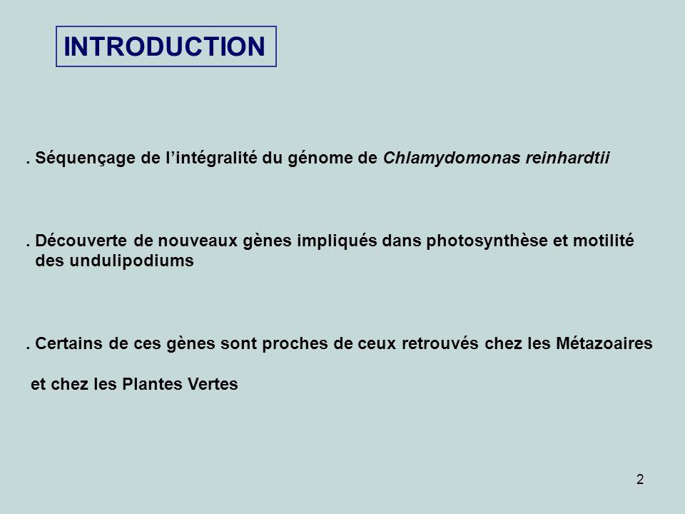 2 INTRODUCTION. Séquençage de lintégralité du génome de Chlamydomonas reinhardtii. Découverte de nouveaux gènes impliqués dans photosynthèse et motili