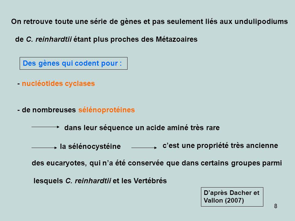 8 On retrouve toute une série de gènes et pas seulement liés aux undulipodiums de C. reinhardtii étant plus proches des Métazoaires - nucléotides cycl