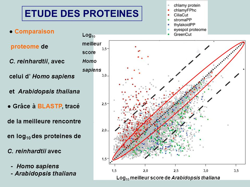 9 ETUDE DES PROTEINES Comparaison proteome de C. reinhardtii, avec celui d Homo sapiens et Arabidopsis thaliana Grâce à BLASTP, tracé de la meilleure