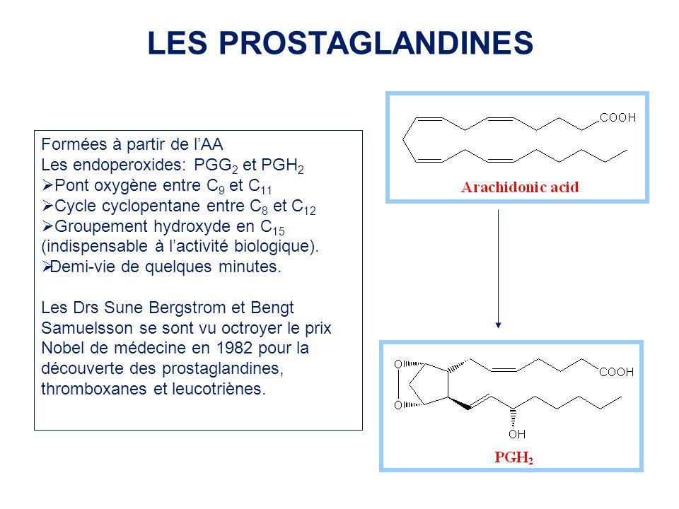 Formées à partir de lAA Les endoperoxides: PGG 2 et PGH 2 Pont oxygène entre C 9 et C 11 Cycle cyclopentane entre C 8 et C 12 Groupement hydroxyde en