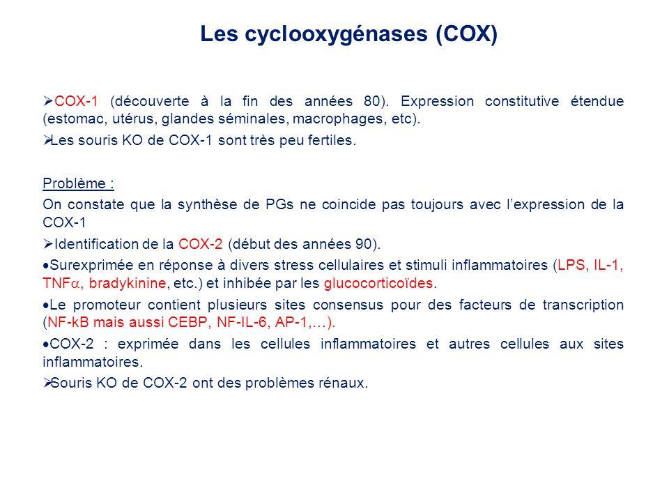 COX-1 (découverte à la fin des années 80). Expression constitutive étendue (estomac, utérus, glandes séminales, macrophages, etc). Les souris KO de CO