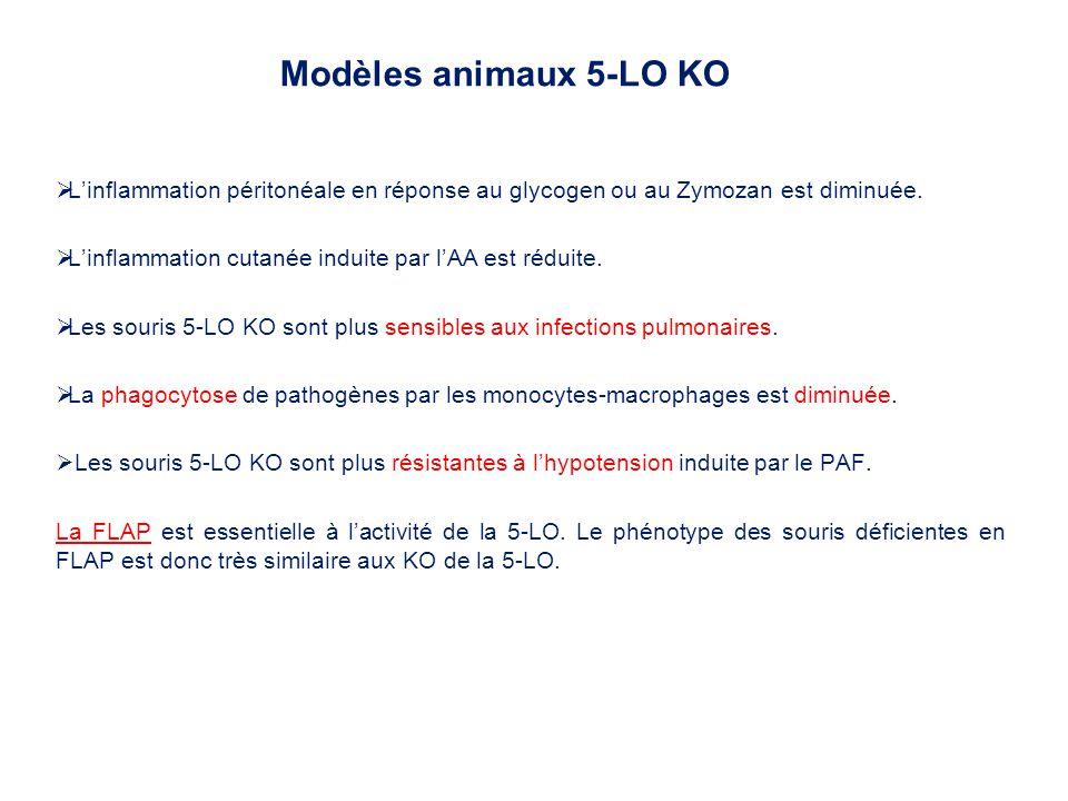 Linflammation péritonéale en réponse au glycogen ou au Zymozan est diminuée. Linflammation cutanée induite par lAA est réduite. Les souris 5-LO KO son