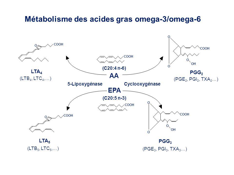 COOH O O O OH COOH 5-LipoxygénaseCyclooxygénase O COOH O O O OH COOH O PGG 3 (PGE 3, PGI 3, TXA 3 …) LTA 5 (LTB 5, LTC 5,…) LTA 4 (LTB 4, LTC 4,…) PGG